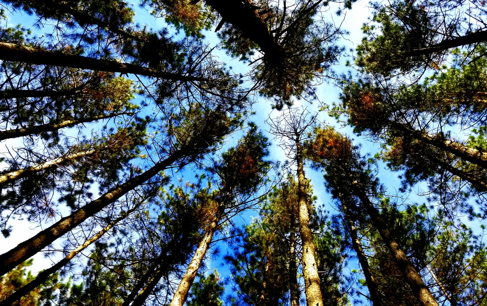 worms-eye-view photography of Dolly Sods Wilderness in West Virginia
